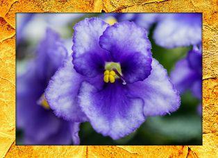 purpleflower3